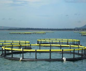 HDPE Aquaculture Cages (For fish farming)